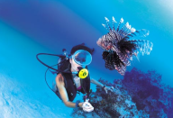 maisonsdeloceanFond marins Guadeloupe-fond-marins-guadeloupe3