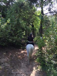 équitation dans la forêt île de ré